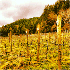 Pruning with Teutonic Wine Company in Alsea, OR