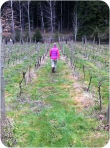 Jesse walks the Alsea Vineyard